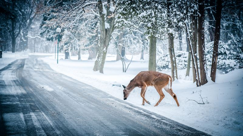 snow-winter-christmas-deer